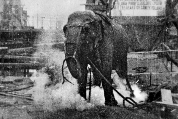 ElectrocutingAnElephant